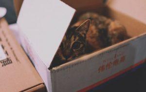 gatos-jugete-cajas