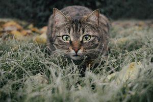 gatos-mascota-ninos