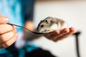 hamster-mascota-ninos