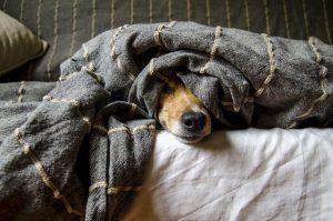 perrito-mascotas-ninos